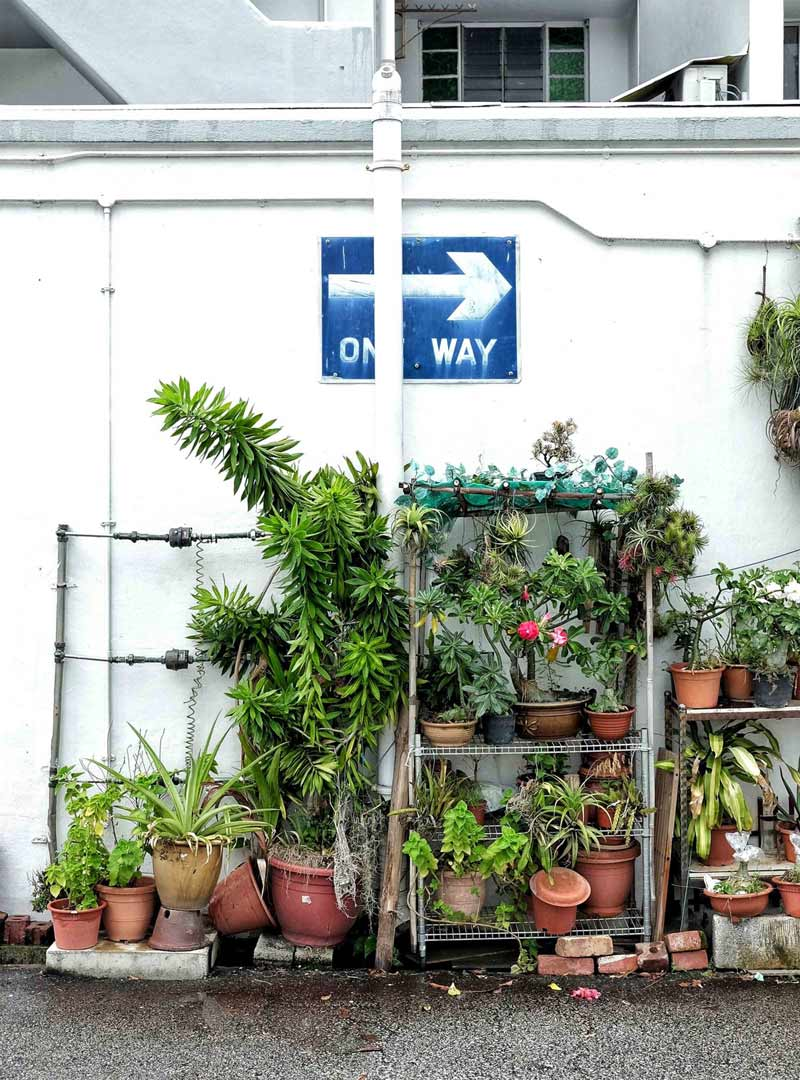 flower pot and plants in the streets of Singapore